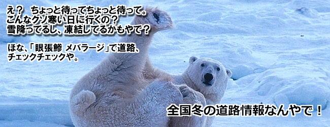 funny-bear-polar